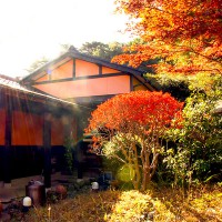 紅葉した庭